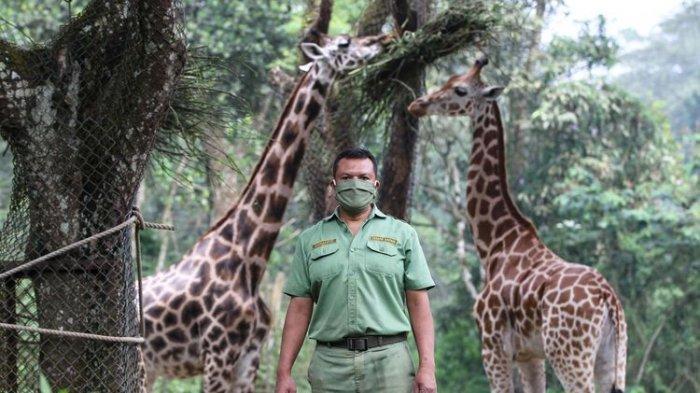 Wahana Wisata Taman Safari di Cisarua Akan Dibuka Pada 15 Juni Mendatang, Utamakan Wisata Outdoor