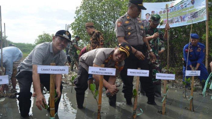 Cegah Abrasi, Pesisir Pantai Ender Cirebon Ditanami 5000 Mangrove