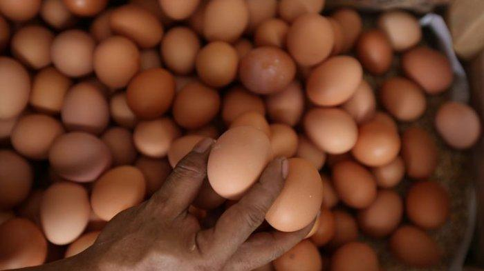AWAS, Peredaran Telur Palsu Sudah Merajalela, Ternyata Ini Ciri Telur yang Diduga Palsu