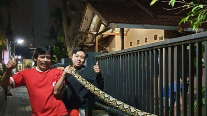 Ular Sanca Batik Sepanjang 7 Meter Kejutkan Warga Cimahi yang Mau Salat Subuh, Dibawa ke Kelurahan