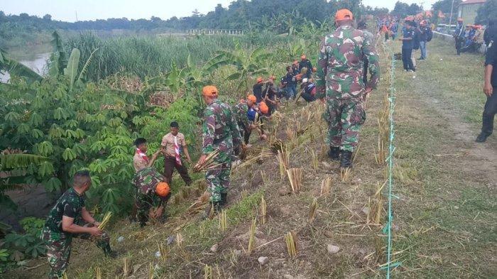 Rumput Vetiver Jadi Andalan Presiden Jokowi Untuk Cegah Bencana Longsor di Daerah Aliran Sungai