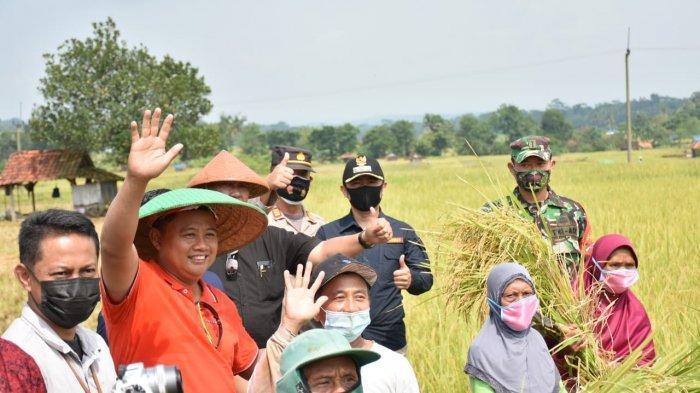 Pak Uu Panen Raya di Kuningan, Sebut Pertanian Masuk Skala Polkam, Namun Lahan Terus Menyusut