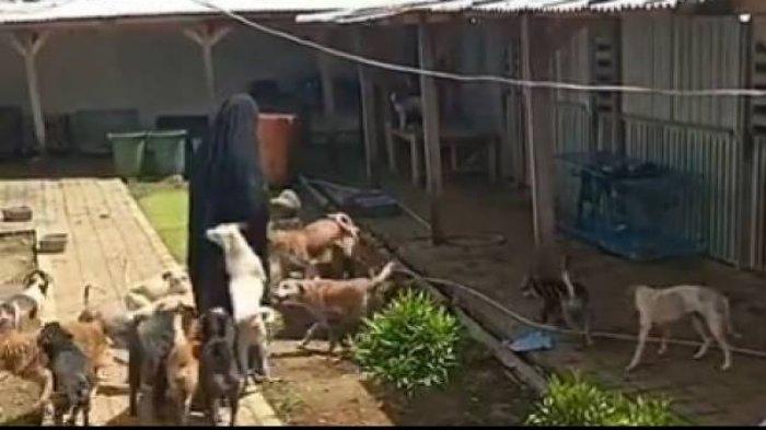 Wanita Bercadar di Bogor Urus Puluhan Anjing hingga Dipersekusi, Ini Kata MUI dan Muhammadiyah