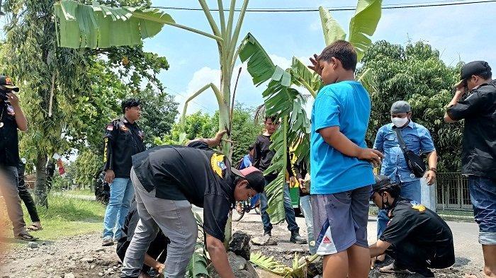 Warga di Indramayu Tanam Pohon Pisang di Jalan Berlubang Lantaran Kesal Tak Kunjung Diperbaiki