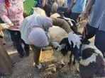 20-hewan-kurban-ditemukan-tidak-layak-jual.jpg