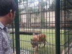 alshad-ahmad-dan-harimaunya.jpg