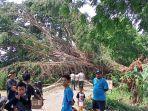 bpbd-kabupaten-indramayu-saat-melakukan-assesment-pada-pohon-beringin-raksasa.jpg
