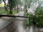 diguyur-hujan-deras-sebuah-pohon-tumbang-di-jalan-gerakan-koperasi-majalengka.jpg