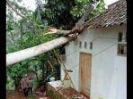 dua-rumah-warga-d-ciamis-tertimpa-pohon-albasia-tumbang.jpg