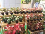 flora-fest-2021-di-gramedia-cipto-cirebon.jpg