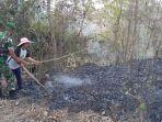 hutan-situs-susuru-terbakar.jpg