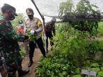 kapolresta-cirebon-panen-lele-dan-sayuran-hasil-budidaya-program-ketahanan-pangan.jpg