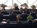 kontes-dan-pameran-bonsai-dan-suiseki-kuningan-342021.jpg
