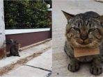 kucing-abu-abu-yang-viral-karena-bawa-tagihan-utang1.jpg