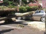 mobil-tertimpa-pohon-tumbang-di-bandung.jpg