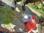 penemuan-mayat-bayi-di-warga-desa-cantilan-kecamatan-selajambe-kabupaten-kuningan.jpg