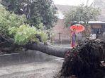 pohon-tumbang.jpg
