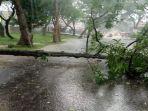 pohon-tumbangdi-dekat-bpbd-majalengka-jumat-2212021.jpg