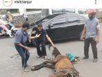 sebuah-kuda-delman-jatuh-diduga-kelelahan-viral-netizen-doakan-sang-kuda-dan-kusir.jpg