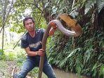 ular-king-kobra-si-covid-2.jpg