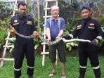 ular-piton-3-meter-dievakuasi-damkar-kuningan.jpg