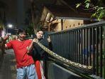 ular-sanca-batik-7-meter.jpg