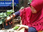 warga-desa-nangka-tanam-sayur-di-pekarangan-rumah.jpg