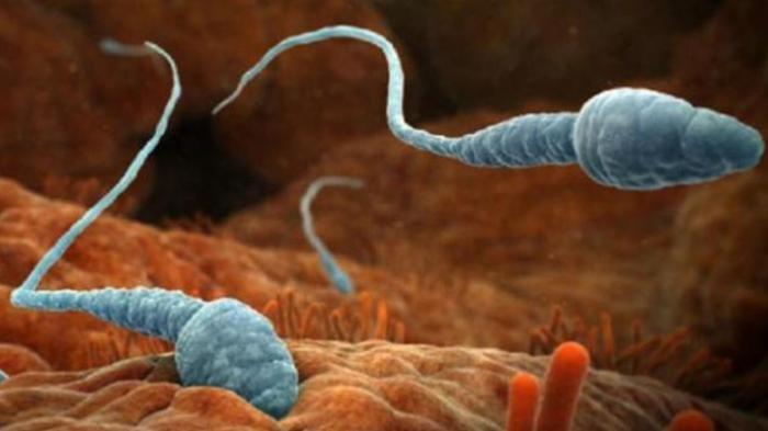 Ilustrasi analisis sperma pria