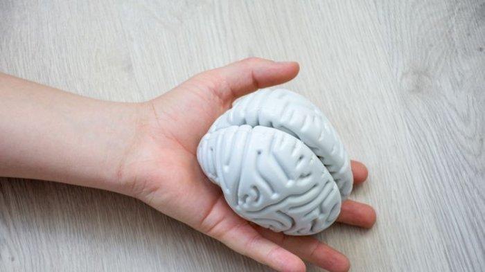 Ilustrasi bentuk otak manusia