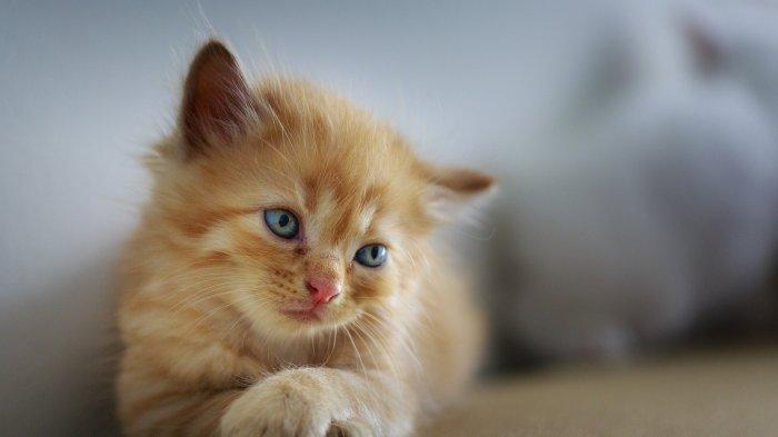 Anak Saya Selalu Bersin-bersin ketika Dekat dengan Kucing, Apa Mungkin Alergi Dok?
