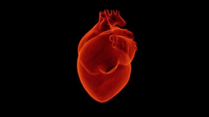 Ilustrasi jantung normal