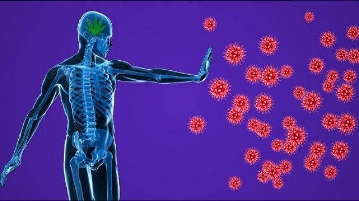 Ilustrasi sistem imun pasien diabetes yang terjangkit COVID-19