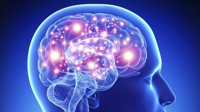 Ilustrasi otak pada manusia