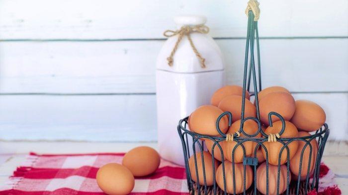 Ilustrasi penyimpanan telur ayam yang baik