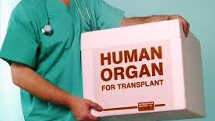 Apakah Kanker Dapat Diatasi Dengan Transplantasi Organ, Dok?
