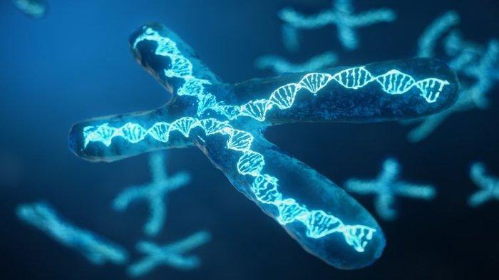 Ilustrasi - Kromosom