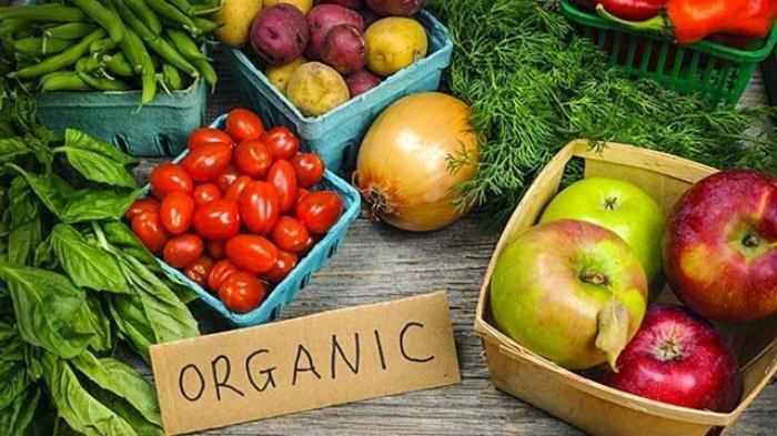 ilustrasi makanan organik
