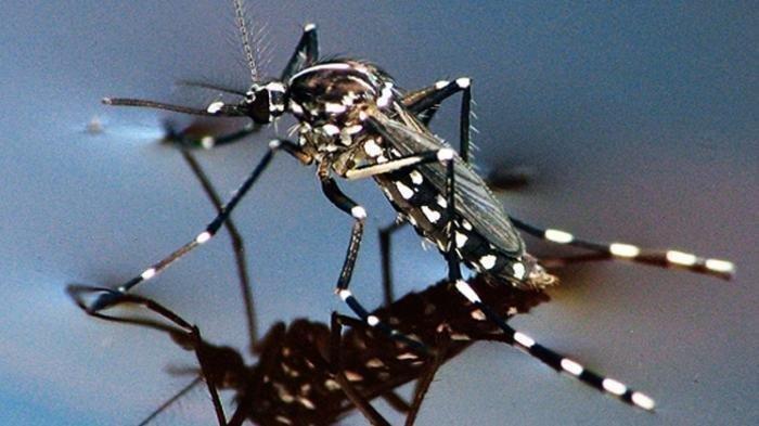 ilustrasi gigitan nyamuk