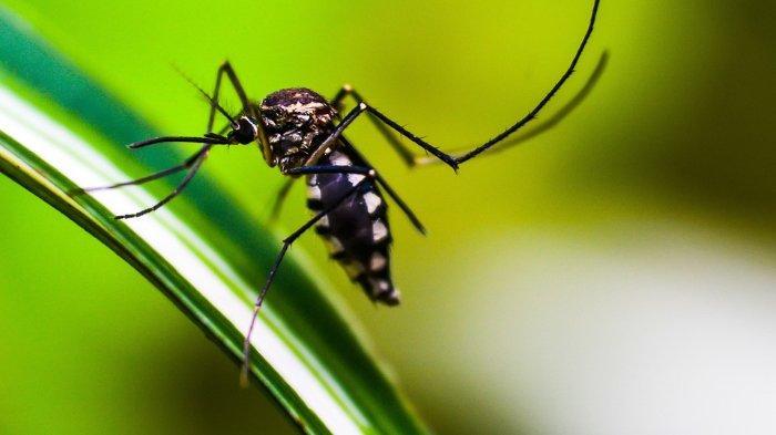 Kenali Gejala Penyakit Virus Zika, Bisa Sebabkan Mikrosepali pada Bayi jika Menginfeksi Ibu Hamil