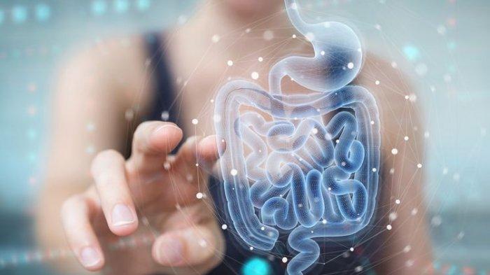 Benarkah Hubungan Otak dengan Saluran Cerna Sangat Erat? Simak Ulasan Dokter Berikut