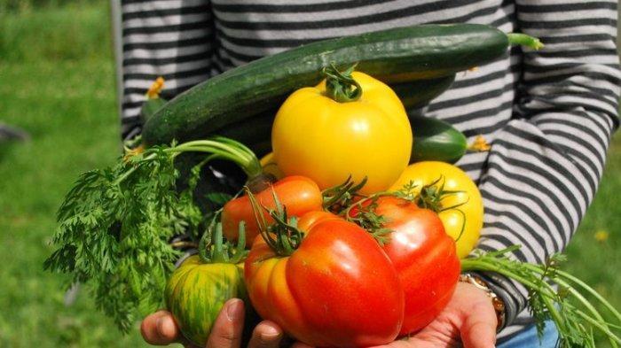 Ilustrasi sayuran yang kaya serat dan bagus untuk kesehatan