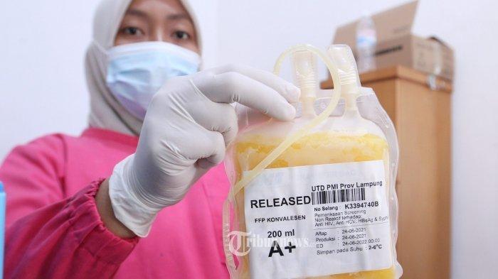 Seorang penyintas Covid 19 mendonorkan plasma konvalesen di Unit Transfusi Darah (UTD) PMI Lampung, Jalan Sam Ratulangi, Penengahan, Tanjungkarang Barat, Jumat (25/6/2021).