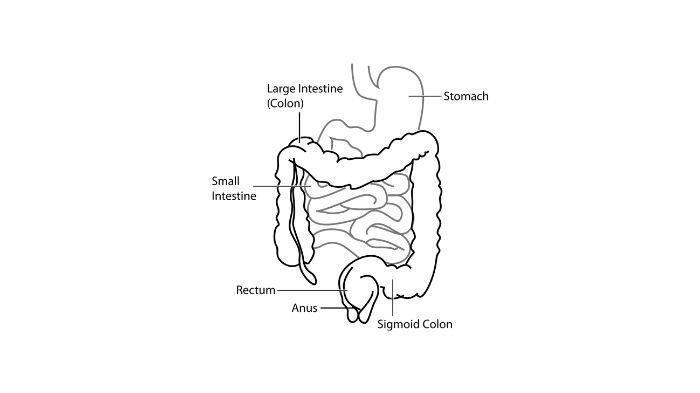 Waspadai Infeksi Kandung Kemih, Bisa Terjadi karena Salah Membersihkan Organ Vital