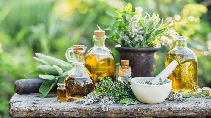 Benarkah Bahwa Tanaman Herbal Mampu Mengobati Covid-19? Berikut Ulasan Apoteker