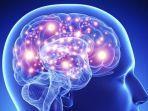 ilustrasi-otak-pada-manusia.jpg