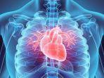 ilustrasi-penderita-jantung-bengkak.jpg