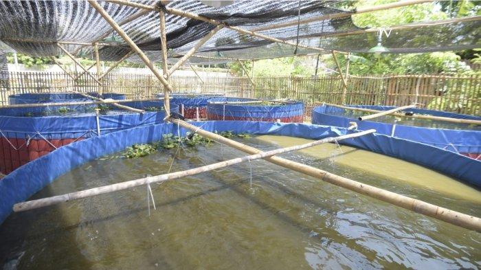 Wakil Gubernur Jawa Barat Uu Ruzhanul Ulum meresmikan Program Kewirausahaan Budaya Ikan Pondok Pesantren Ihya Ulumuddin, Kota Cirebon, Sabtu (25/9/2021).