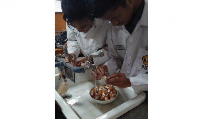 Inspiratif dan Unik, 3 Mahasiswa Ini Ciptakan Bahan Tambal Gigi Terbuat dari Cangkang Telur