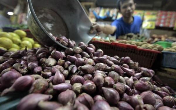 Cara Menanam Bawang Merah di Pot atau Polybag, Tanaman Sehat Tidak Busuk Sampai Dipanen