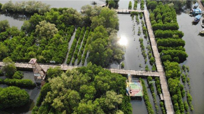 Proses penanaman 700 pohon mangrove di pesisir pantai utara Jawa bertempat di Desa Segarajaya, Kecamatan Tarumajaya, Bekasi.